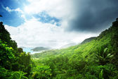 Dschungel der seychellen-insel — Stockfoto