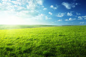 Field of spring grass and forest — Stockfoto