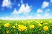 春天花的领域 — 图库照片