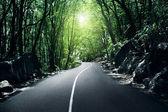 Ormanda yol — Stok fotoğraf