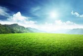 Field of grass in mountain — Stock Photo