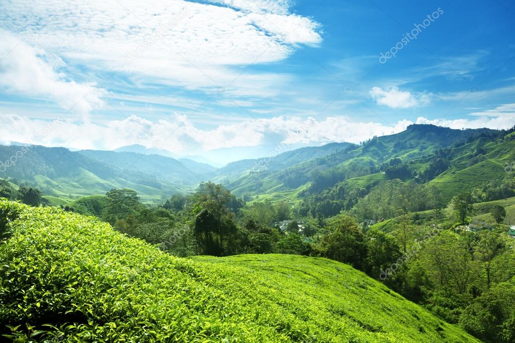 Tea plantation Cameron highlands, Malaysia  Stock Photo #18927729