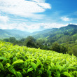 Tea plantation Cameron highlands, Malaysia — Stockfoto #19101691