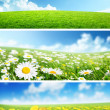 Stock Photo: Banners of spring flowers and grass