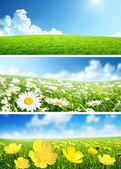春天的花朵和草的横幅 — 图库照片