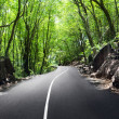 Road in jungle — Stock Photo