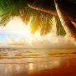 Sunrise on Caribbean beach — Stock Photo #19682307