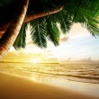 Sunrise on Caribbean beach — Stock Photo #19682313