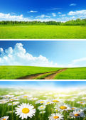 Banners of spring fields and flowers — Foto Stock