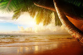 Sunrise on Caribbean beach — Stock Photo