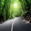 Road in jungle - Stock Photo
