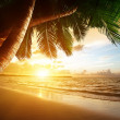 Sunrise on Caribbean beach — Stock Photo #20019173