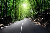 Chemin dans la jungle — Photo