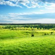 Field of spring grass and forest — Stock Photo #21258489