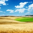 Stock Photo: Barley hills Tuscany, Italy