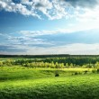 Field of spring grass and forest — Stock Photo #21677911
