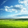 Field of spring grass and forest — Stock Photo #21677915