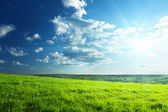 поле трава весной и лес — Стоковое фото