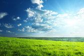 Bahar çimen ve orman alanı — Foto de Stock