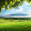 Stockfoto: Field of spring grass and forest