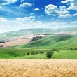 Summer landscape of Tuscany, Italy — Stock Photo