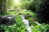 River in jungle — Stock Photo