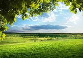 Campo di erba di primavera e foresta — Foto Stock