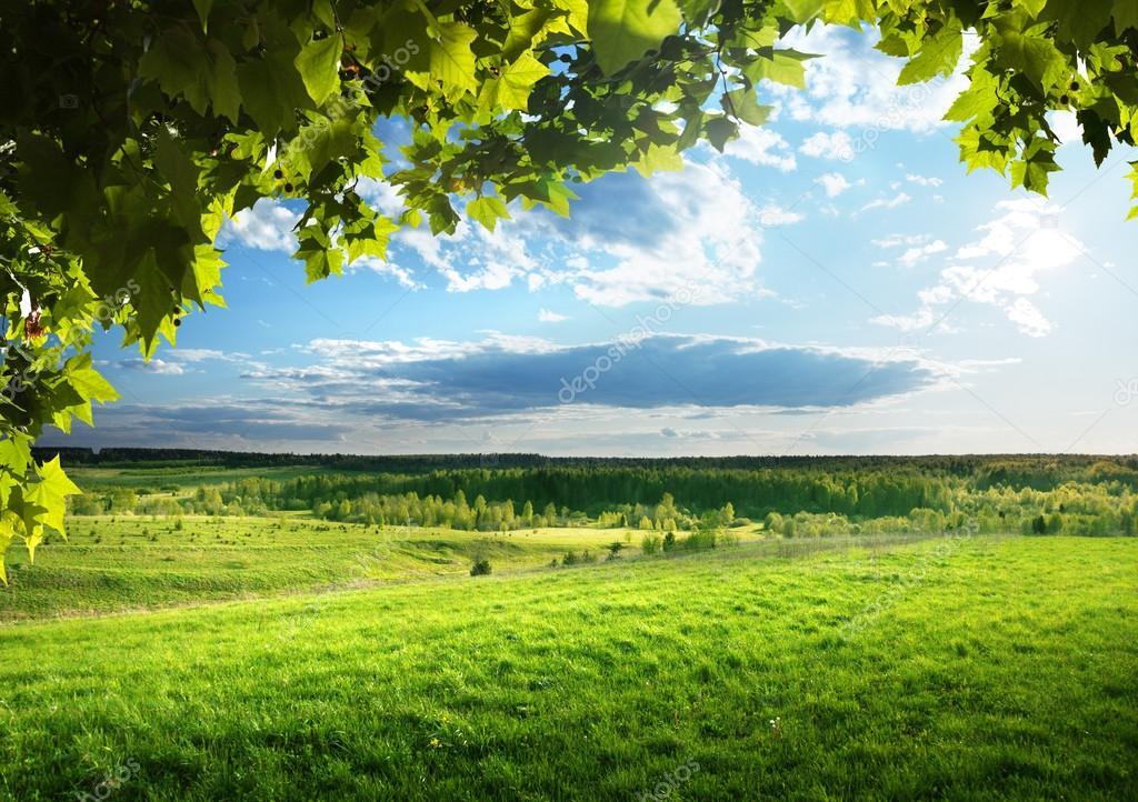 Фотообои Поле весенней травы и леса