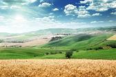 Summer landscape of Tuscany, Italy — Stock Photo