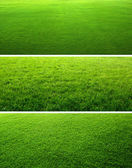 Groen gras achtergronden — Stockfoto