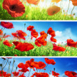 Set of poppie flowers — Stock Photo