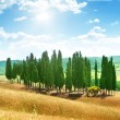 Trees in Val d&#039;Orcia, Tuscany - Stock Photo