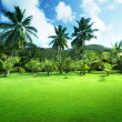 Field of grass and coconut palms on Praslin island, Seychelles — Stok Fotoğraf #24846967