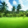 Field of grass and coconut palms on Praslin island, Seychelles — Stock fotografie