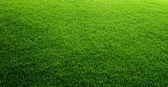 зеленая трава фон — Стоковое фото