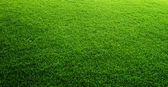 Green grass background — Stock fotografie