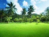 Field of grass and coconut palms on Praslin island, Seychelles — Stock Photo