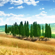 Trees in Val d'Orcia, Tuscany - Stock Photo