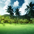 Stock Photo: Field of grass and coconut palms on Praslin island, Seychelles