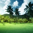 Стоковое фото: Field of grass and coconut palms on Praslin island, Seychelles