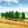 Trees in Val d'Orcia, Tuscany — стоковое фото #25465283