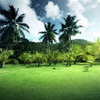 Field of grass and coconut palms on Praslin island, Seychelles — Stockfoto