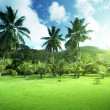 Field of grass and coconut palms on Praslin island, Seychelles — Foto de Stock