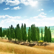 Trees in Val d'Orcia, Tuscany — 图库照片