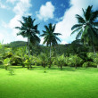 Foto Stock: Field of grass and coconut palms on Praslin island, Seychelles