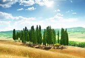 Trees in Val d'Orcia, Tuscany — Foto Stock