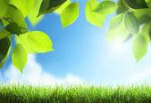 Spring sunny background — Stock Photo