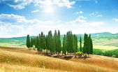 Trees in Val d'Orcia, Tuscany — Stok fotoğraf