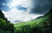 Jungle of seychelles island — Stock Photo