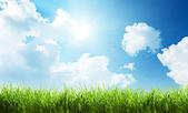 Grass at sunny day — Stock Photo